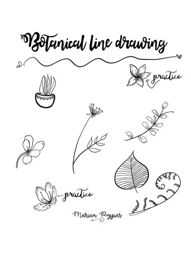 Drawing Lines In Pdf : Botanical line drawing by peggy dean mariam poppins
